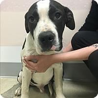 Adopt A Pet :: Diego - Agoura Hills, CA