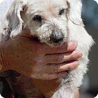 Adopt A Pet :: Miss Mable - Columbus, GA