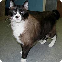 Adopt A Pet :: Schafer - New Kensington, PA