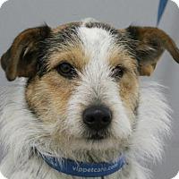 Adopt A Pet :: Cody - Spring Valley, NY