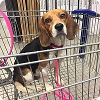 Adopt A Pet :: Buck - New Orleans, LA