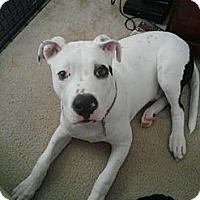 Adopt A Pet :: Petey - Charlotte, NC