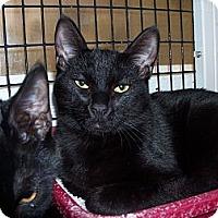 Adopt A Pet :: Deniro - El Cajon, CA