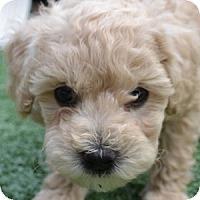 Adopt A Pet :: Grayson - La Costa, CA