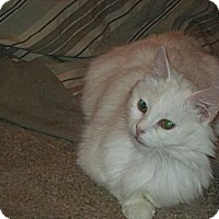 Adopt A Pet :: Sophia - Warren, OH