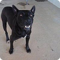Adopt A Pet :: TRAMP - Powellsville, NC