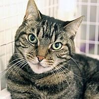 Adopt A Pet :: Hooker - Pacific Grove, CA