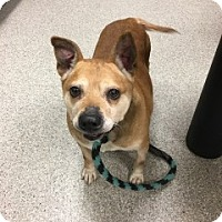 Adopt A Pet :: Lizzie - Saginaw, MI
