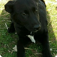 Adopt A Pet :: Shiloh - Harrisonburg, VA