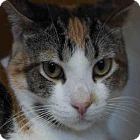 Adopt A Pet :: CALYPSO - West Palm Beach, FL