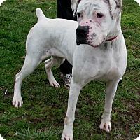 Adopt A Pet :: Lacey - New Kensington, PA