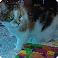Adopt A Pet :: Senior Cats (Fosters Needed) - Rochester Hills, MI