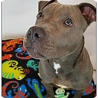Adopt A Pet :: Easton - Toledo, OH