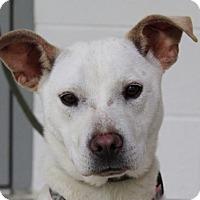 Adopt A Pet :: Princess - Spring Valley, NY