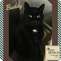Adopt A Pet :: Buddy - Washington, PA