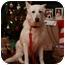 Photo 1 - German Shepherd Dog Dog for adoption in Conyers, Georgia - Lisbeth