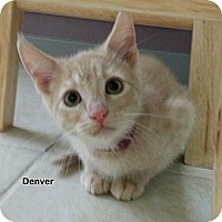 Adopt A Pet :: Denver - Portland, OR