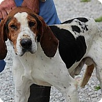 Adopt A Pet :: Olaf - Brattleboro, VT