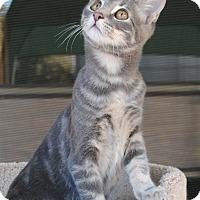 Adopt A Pet :: Baxter - Palmdale, CA