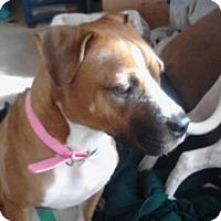 Adopt A Pet :: Daisey - Beachwood, OH