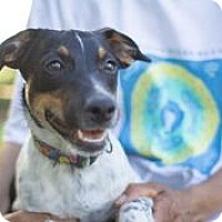 Adopt A Pet :: Lucy - Coral Springs, FL