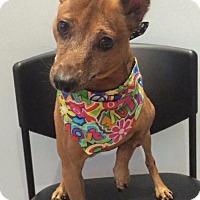 Adopt A Pet :: Danny - Jupiter, FL