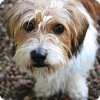 Adopt A Pet :: Linus - MEET ME - Norwalk, CT