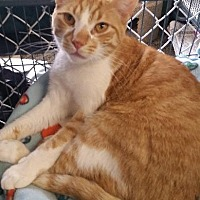 Adopt A Pet :: Willy - Freeport, NY