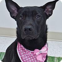 Adopt A Pet :: Pup - Chambersburg, PA