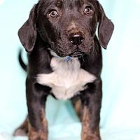Adopt A Pet :: Lenny - Waldorf, MD