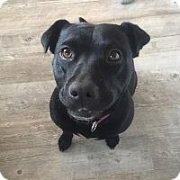 Adopt A Pet :: Lexi - Summerville, SC