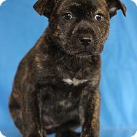 Adopt A Pet :: Lucky - Waldorf, MD