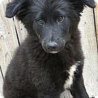 Adopt A Pet :: Dora*ADOPTED!* - Chicago, IL