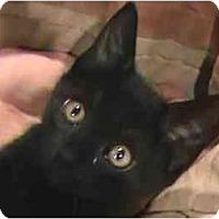 Adopt A Pet :: Geb - Jenkintown, PA
