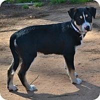 Adopt A Pet :: Trudie - Athens, GA