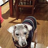 Adopt A Pet :: Fabulous Freckles - Madison, NJ