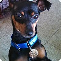 Adopt A Pet :: Trey - Columbus, OH