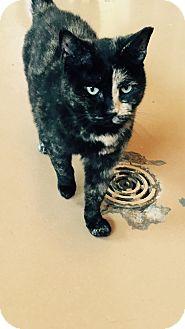 Calico Cat for adoption in Goshen, New York - Esmeralda