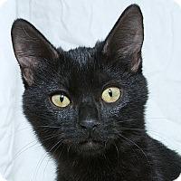 Adopt A Pet :: Theresa V - Sacramento, CA