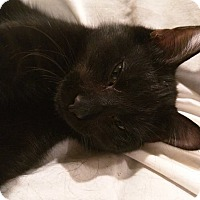 Adopt A Pet :: Belle - Colfax, IA