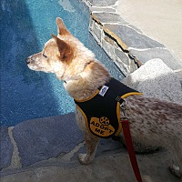 Adopt A Pet :: Scofield - Valencia, CA