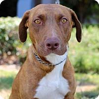 Adopt A Pet :: Palca - San Diego, CA