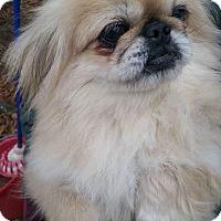 Adopt A Pet :: Joling - Crump, TN