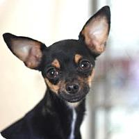 Adopt A Pet :: ZANNA - Kyle, TX