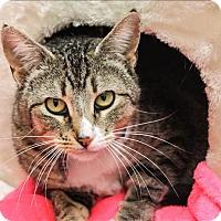 Adopt A Pet :: Cassidy - San Luis Obispo, CA