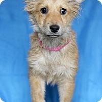 Adopt A Pet :: Raisin - Waldorf, MD
