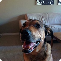 Adopt A Pet :: Winston - Surrey, BC