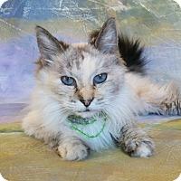Adopt A Pet :: Hiromi - Davis, CA
