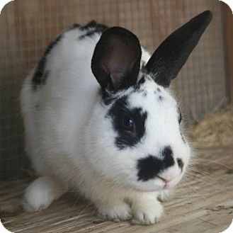 American Mix for adoption in Freeport, Florida - Jelly Bunny