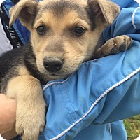 Adopt A Pet :: Riley (6 lb) Video - Sussex, NJ